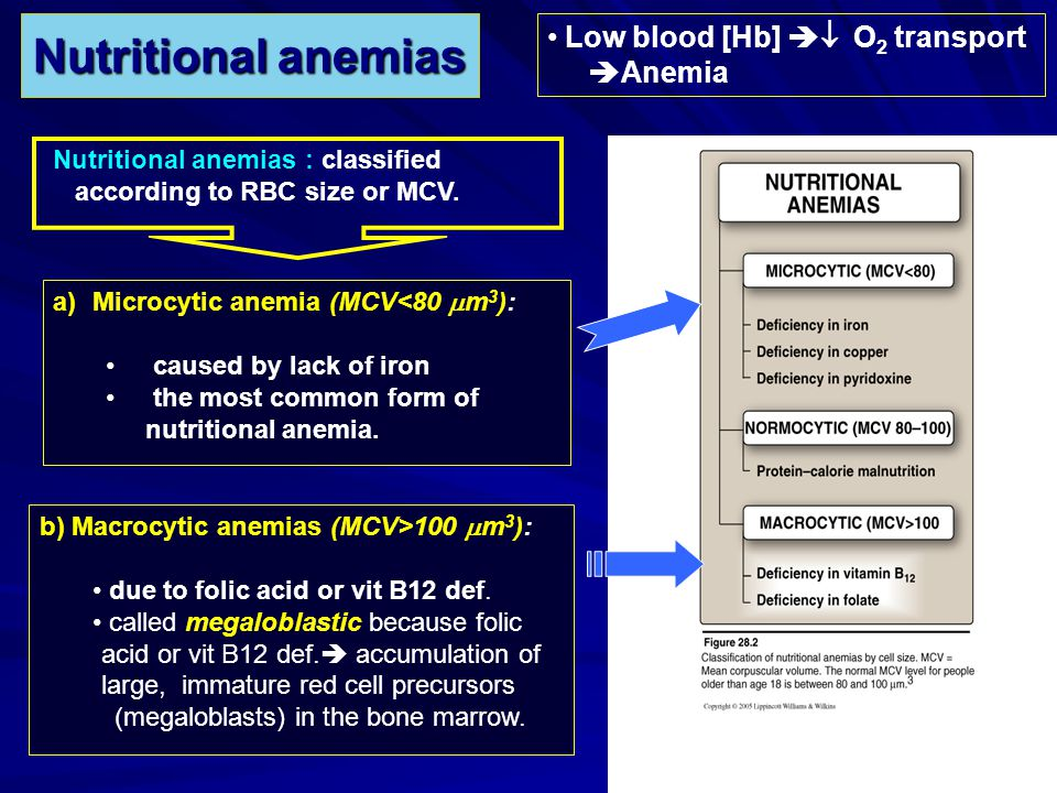 Nutritional anemias Low blood [Hb]  O2 transport Anemia